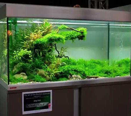 kính bể cá tại hải phòng